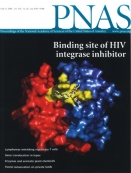 Synergistic anti-HCV broadly neutralizing human monoclonal antibodies with independent mechanisms - image